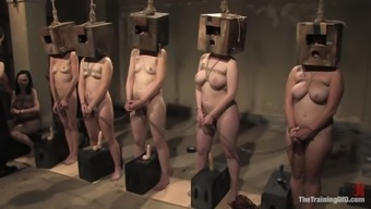 Submissve Girls Please Their Greats Within the Thrall Restrain